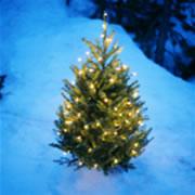 クリスマスイメージ1.jpg